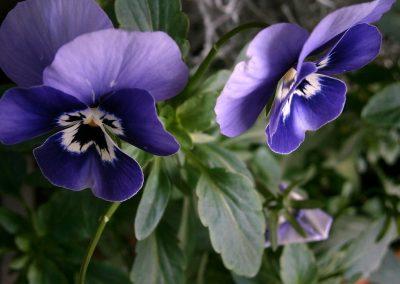 Plantes d'exterior