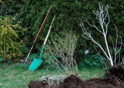Disseny i manteniment de jardins